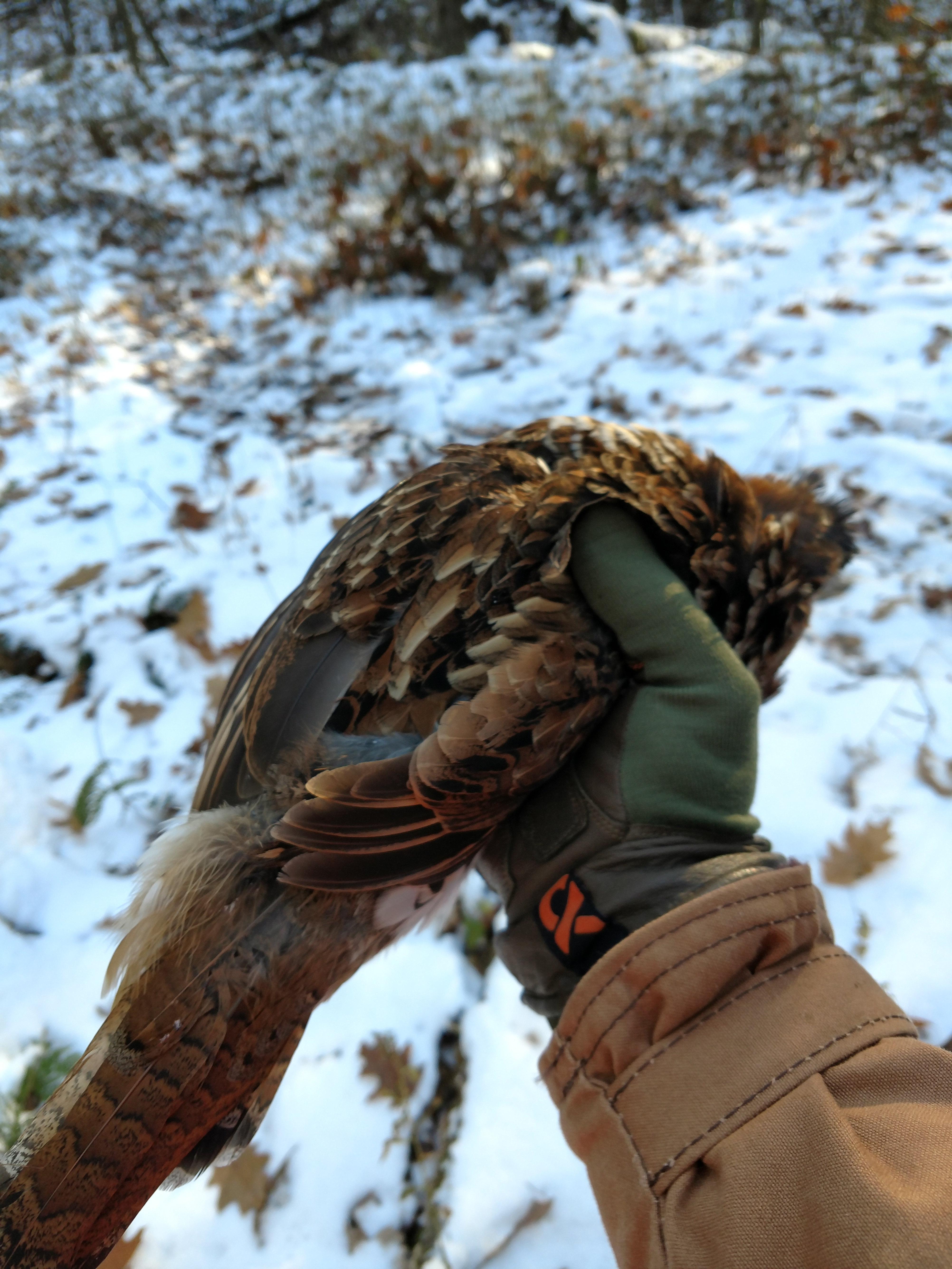 Dan's Briarproof Upland Game Coat in action in the Pennsylvania Grouse Covers.